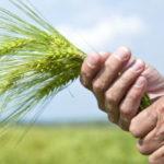 Arriva la legge sull'agricoltura sociale