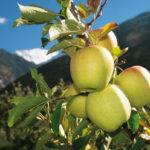 Malles Venosta, il primo comune che ha detto no ai pesticidi