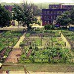 Boom di orti urbani in Italia: triplicati in due anni