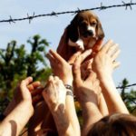 """Condannati i vertici di Green Hill: """"Vittoria storica per gli animali"""""""