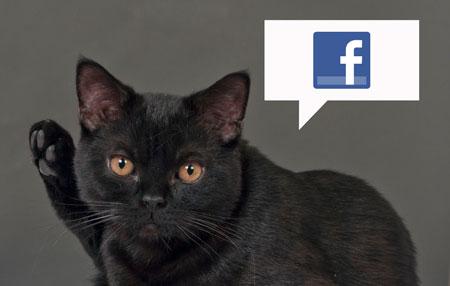 NBS-facebook-cat-450