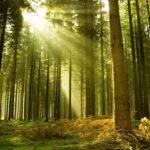 Foreste europee a rischio: cinque passi per salvaguardarle