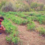 Tornare alla terra: si può vivere coltivando in modo naturale?
