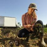 L'agricoltura sostenibile del futuro: le sette proposte di Greenpeace