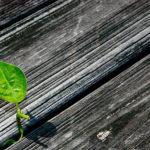 Sì, una prosperità senza crescita è possibile