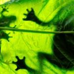 """Giornata mondiale della biodiversità: """"in Italia un tesoro maltrattato"""""""