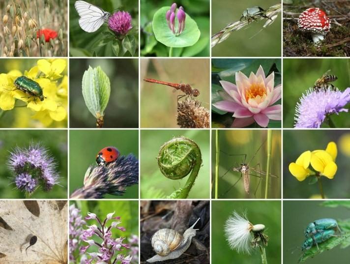 international-day-biodiversity-22-may_22513