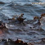 Cos'è un disastro ambientale 'abusivo'? Le critiche alla legge sugli ecoreati