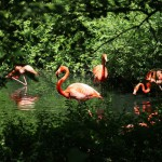 Un'oasi per conoscere la natura