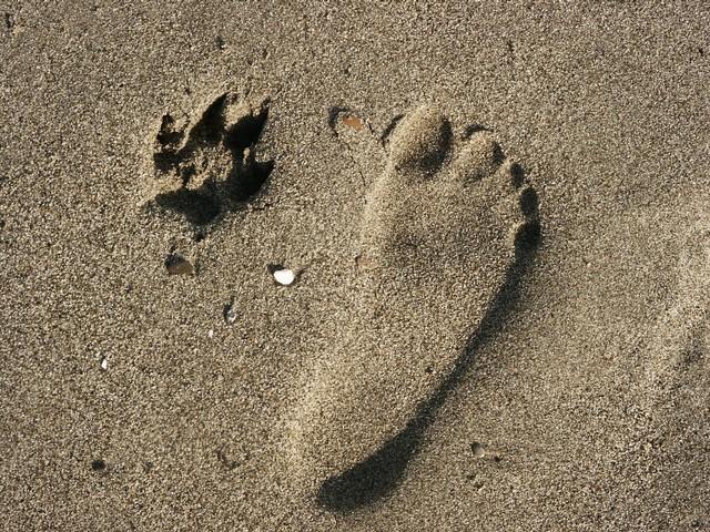 zampe e piedi