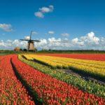 Dall'Olanda una sentenza storica per il clima: governo obbligato a ridurre emissioni CO2