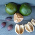 Colombia: olio di cacay contro povertà e deforestazione