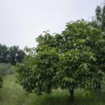 #biellesechecambia 20 – L'Azienda agricola Luigi Manenti