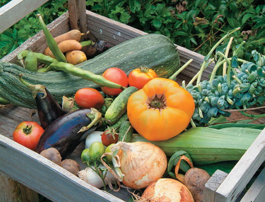 The-Basics-Of-Planting-Vegetable-Gardens