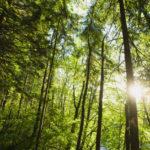 Crescono le foreste italiane