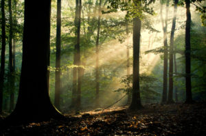 sunny_forrest_by_peenbuiker-d50b44a