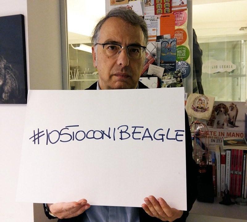 beagle1 (1)
