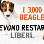 Io sto con i beagle: nessun cane deve tornare a Green Hill!
