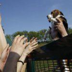 I cani sono salvi: confermate le condanne in appello contro Green Hill