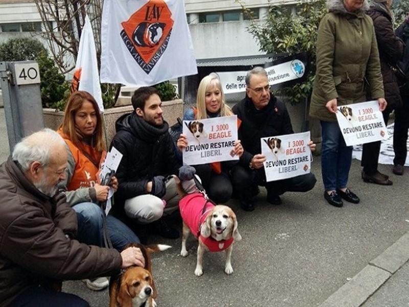 """2639 cani messi in salvo e affidati a famiglie nel giro di poche settimane. La liberazione di Green Hill è stata un'operazione complessa, che non ha precedenti per numero di animali """"da laboratorio"""" liberati"""