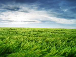 366175-green-field-photos