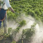 Pesticidi: sospeso il rinnovo del glifosato