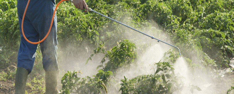Man spraying vegetables in the garden