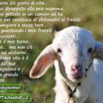 A Pasqua adotta un agnello!