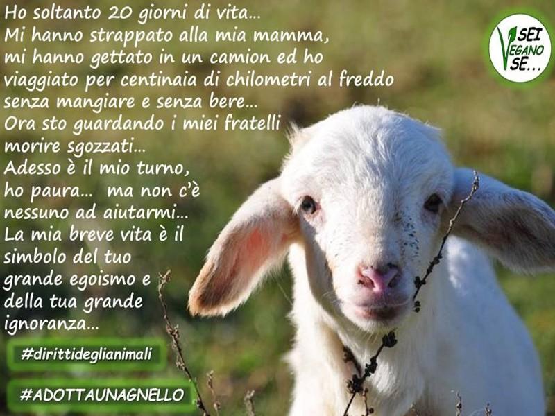 adotta-agnello