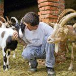 Stock Island e l'isola carcere di Gorgona: modelli di convivenza tra uomini e animali