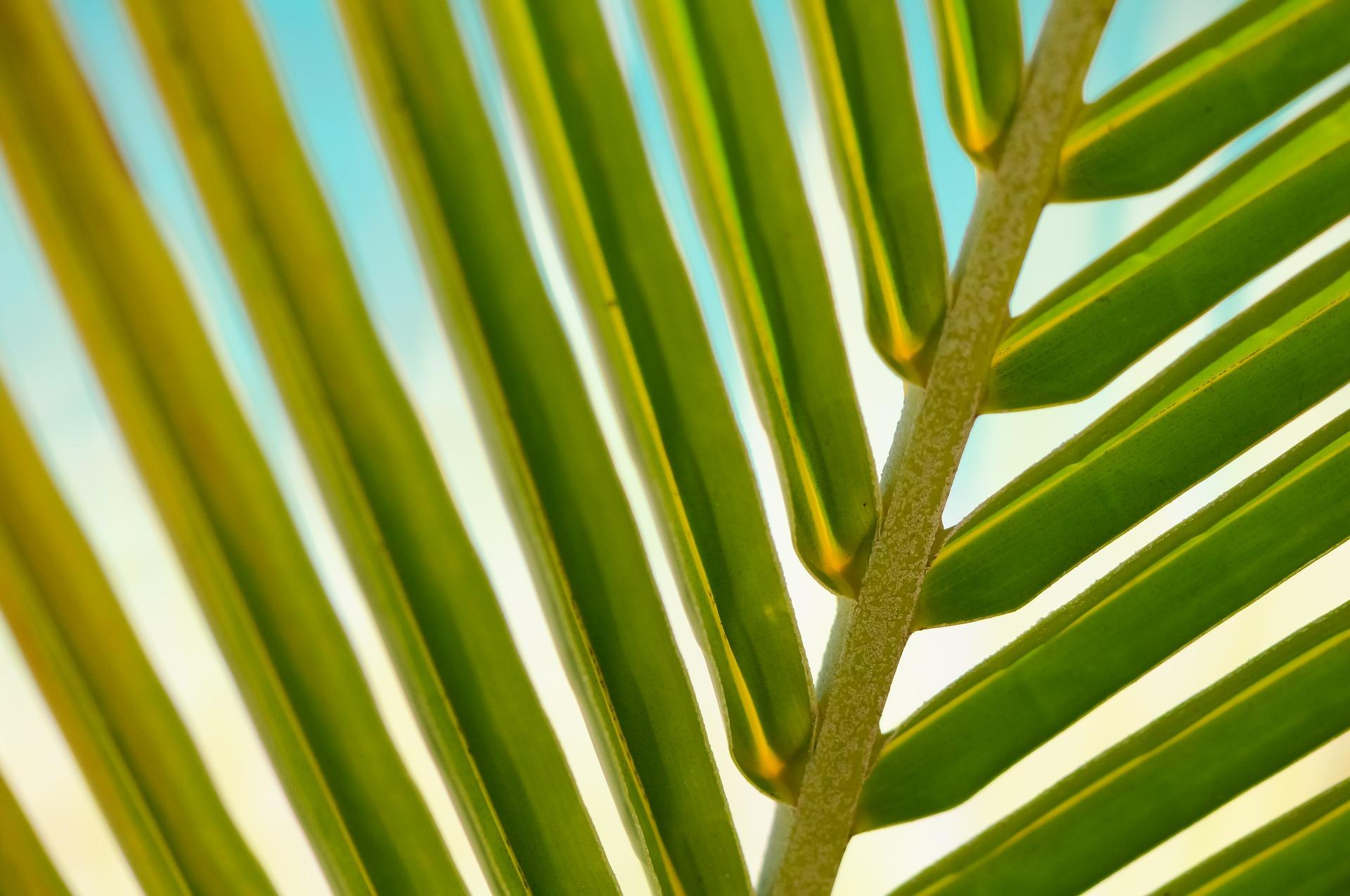 plant-600496_1920