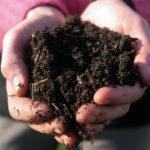 Dal Sudamerica all'Italia: le opportunità dell'agricoltura organica e rigenerativa