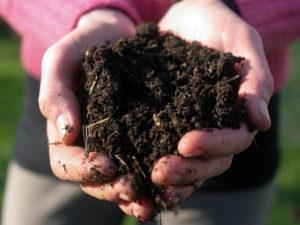 soil-2