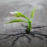 Abbiamo bisogno di crescita e sviluppo