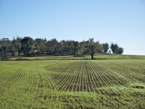 Terreno verde