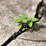 La natura vince sul cemento: assolta la sindaca che tutela il paesaggio