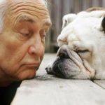 """""""Questa è una vecchia amicizia"""": uniti per l'adozione di cani e gatti adulti"""