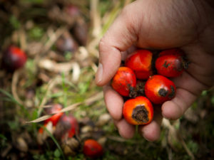 wwf_malaysia_mazini_abd_ghani_palm_oil_plantation_in_sabah