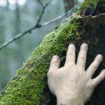 Ecosofia, l'uomo e la sua relazione con la Terra