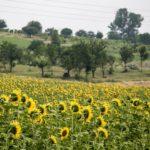 Trame d'Italia: (ri)scoprire il territorio con il turismo esperienziale