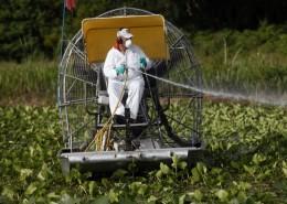 Il glifosato, l'erbicida più diffuso al mondo, è stato classificato come dallo Iarc come possibile cancerogeno per l'uomo