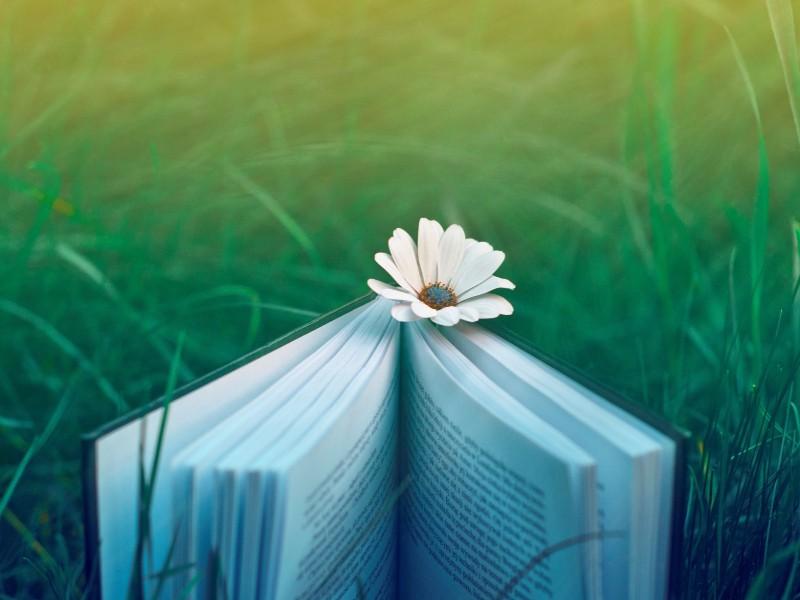 book_mood_nature_grass_flowers_31537_3840x2400