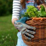 La campagna va in città: l'orto condiviso di Ferrara