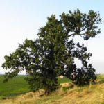 """Quercophilus: """"salviamo i boschi italiani dai tagli selvaggi"""""""