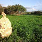 Karadrà: l'aridocultura che rilancia il Salento e unisce generazioni