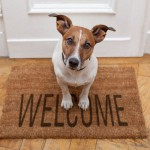 È illeggittimo vietare gli animali domestici nei condomini