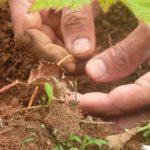 Agricoltura Organica Rigenerativa: Deafal e la cooperativa Nuovo Cilento