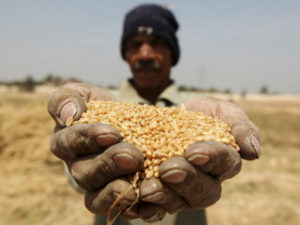 Egypt-agriculture-development-economic-foreign-aid-assistance-US (1)