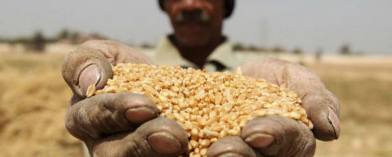 Egypt-agriculture-development-economic-foreign-aid-assistance-US (1)