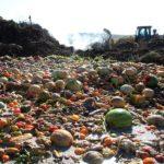 Alla radice dello spreco alimentare